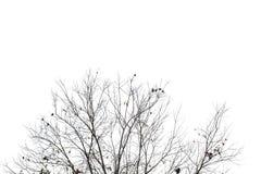 Branche d'arbre Photographie stock
