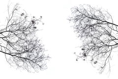 Branche d'arbre Photo stock