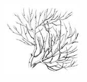 Branche d'arbre Photo libre de droits