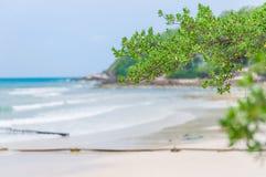 Branche d'arbre au-dessus de plage Image stock