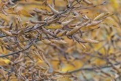 Branche d'arbre automnal photo stock
