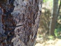 Branche d'arbre avec des couleurs Image libre de droits