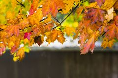 Branche d'arbre avec des feuilles dans des couleurs d'automne photographie stock libre de droits