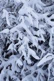Branche d'arbre avec la neige pendant l'hiver Image libre de droits