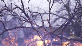 Branche d'arbre brûlante dans la fumée lourde de forêt contre le ciel clips vidéos