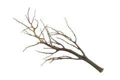 Branche d'arbre, branche morte d'isolement Images libres de droits