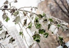 Branche d'arbre couverte de la glace Image libre de droits