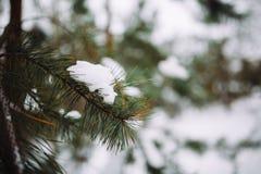 branche d'arbre couverte de neige au coucher du soleil Photographie stock libre de droits