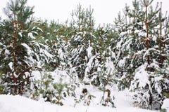 branche d'arbre couverte de neige au coucher du soleil Images stock