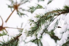 branche d'arbre couverte de neige au coucher du soleil Image libre de droits