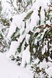 branche d'arbre couverte de neige au coucher du soleil Image stock