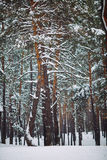 branche d'arbre couverte de neige au coucher du soleil Photo stock