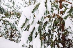 branche d'arbre couverte de neige au coucher du soleil Photos stock