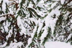 branche d'arbre couverte de neige au coucher du soleil Images libres de droits