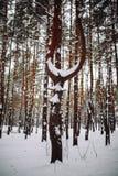 branche d'arbre couverte de neige au coucher du soleil Photographie stock