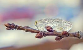Branche d'arbre couverte de neige et de glace, arbre de neige, fin, macro Photos libres de droits