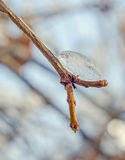 Branche d'arbre couverte de neige et de glace, arbre de neige, fin, macro Image stock