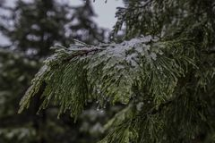 Branche d'arbre couverte par glace avec des cristaux de l'eau sur les feuilles photographie stock