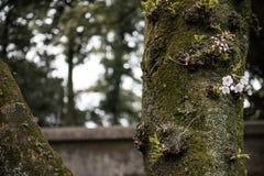 Branche d'arbre dans la forêt Photographie stock libre de droits