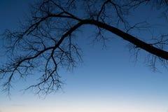 Branche d'arbre dans la perspective du ciel nocturne Image libre de droits