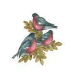 Branche d'arbre de composition, oiseau de bouvreuil illustration de vecteur