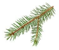 Branche d'arbre de Noël d'isolement sur le blanc avec le chemin de coupure images stock