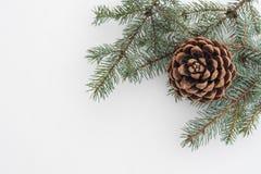 Branche d'arbre de sapin avec le cône de pin sur la neige blanche Fond de Noël photos libres de droits