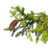 Branche d'arbre de sapin avec le cône d'isolement sur le blanc Photographie stock