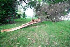 Branche d'arbre endommagée par tempête images stock