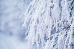 Branche d'arbre à feuilles caduques couverte de neige et de gel Image stock