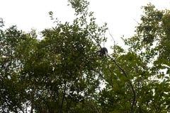 branche d'arbre forestier Image libre de droits