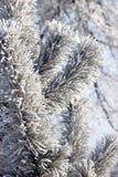 Branche d'arbre gelée dans la forêt d'hiver Photo libre de droits
