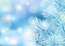 Branche d'arbre gelée sur le contexte de tache floue Photos libres de droits