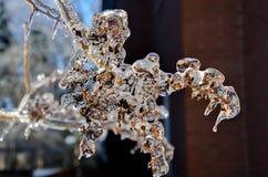 Branche d'arbre glacée Images stock