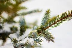 Branche d'arbre impeccable avec la neige blanche Arbre impeccable d'hiver dans le frostLayer de la neige sur des branches de sapi image stock
