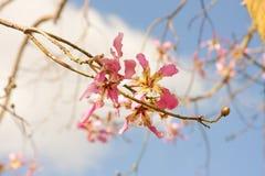 Branche d'arbre ivre Photographie stock
