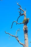 Branche d'arbre mort Photos libres de droits