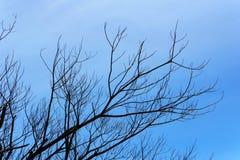 Branche d'arbre mort avec le beaux ciel bleu et nuage Images stock