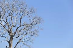 Branche d'arbre mort sur le fond de ciel bleu Image stock