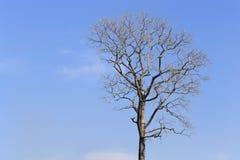 Branche d'arbre mort sur le fond de ciel bleu Photos stock