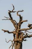 Branche d'arbre morte Photos stock