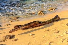 Branche d'arbre morte sur la plage images stock