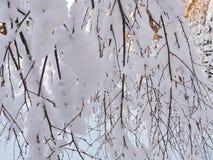 Branche d'arbre neigeuse blanche de bouleau, Lithuanie Photos stock