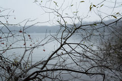 Branche d'arbre nu image libre de droits
