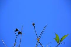 Branche d'arbre plat contre le ciel bleu Images libres de droits