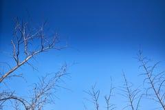 Branche d'arbre sèche avec le ciel vif photographie stock libre de droits