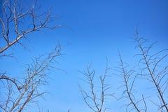 Branche d'arbre s?che avec le ciel vif image stock