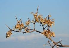 Branche d'arbre sans feuilles Image stock