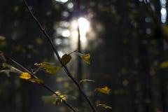 Branche d'arbre sans feuilles dans la forêt d'automne image libre de droits