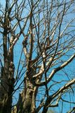 Branche d'arbre sec Photo stock